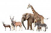 image of antelope  - Giraffe - JPG