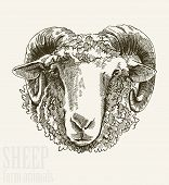stock photo of ram  - Vector illustration of engraving ram head close up on white background - JPG