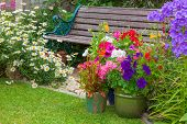 foto of digitalis  - Cottage garden with wooden bench and flowers in containers - JPG