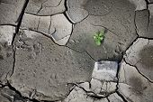 foto of drought  - Cracked earth from the intense heat - JPG