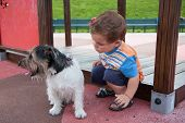 foto of baby dog  - portrait of baby with little dog on the playground - JPG