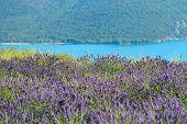 foto of plateau  - Stunning landscape with lavender field on Verdon river shore - JPG