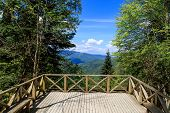 picture of observed  - View of observation terrace in Yedigoller National Park among high trees on blue sky background - JPG