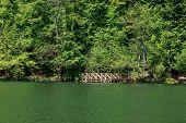 image of pier a lake  - View of wooden pier in smooth lake side among big trees - JPG