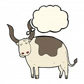 foto of oxen  - cartoon ox with thought bubble - JPG