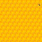 pic of honeycomb  - Vector Illustration of a Natural Background with Honeycombs - JPG