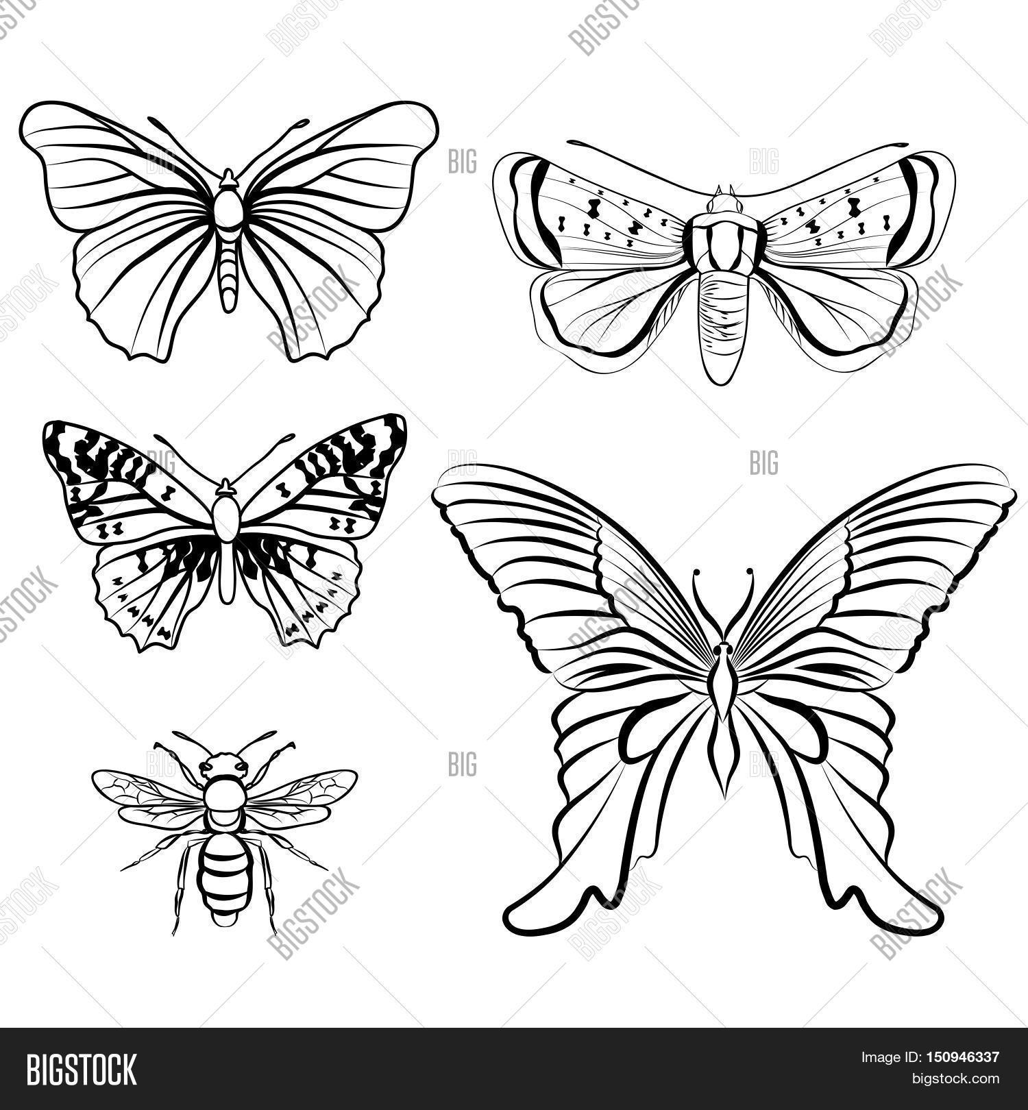 butterfly set insect doodle vector u0026 photo bigstock