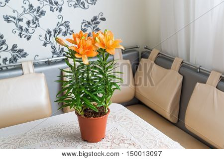 orange lily in the interior of room