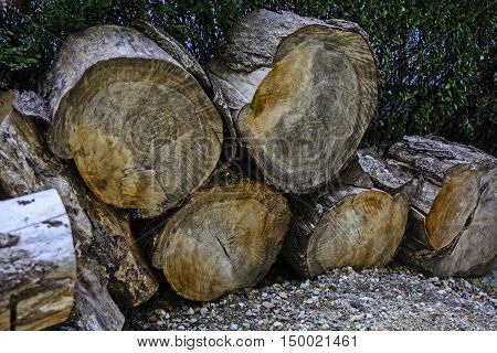Felled wood awaiting winter for home heating.
