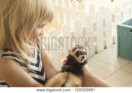 Giggling little girl is taking a ferret in her arms