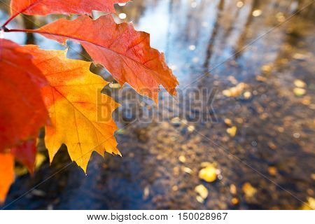 detail of leaf with a creek in the autumn