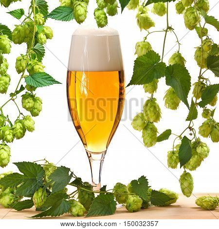 glass of beer with hops on the white background