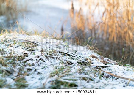 Frozen blades of grass covered with light snow or morning hoar at the edge of frozen lake