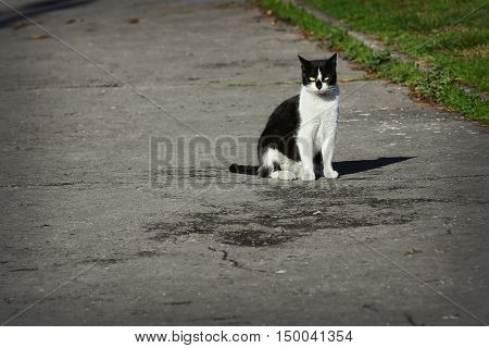 Black and white stray cat sitting on the street