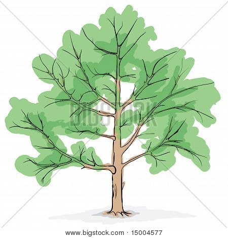 Simplified Image - Crone Of Tree