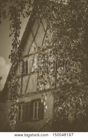 Birch leaves with house in background - Vintage image with hanging birch tree leaves in the foreground and an old german house in background