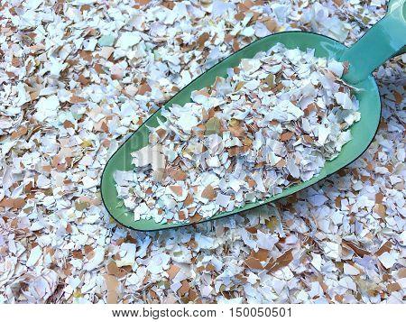 Many small pieces of broken eggshells on a green shovel in closeup