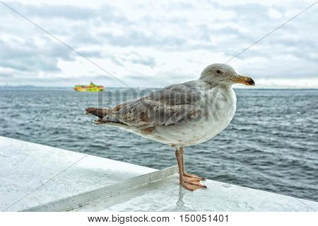 Seagull standing on a ship in the sea