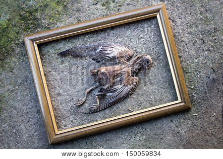 Skeleton of dead road kill bird on the road with frame around