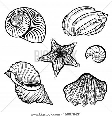 Seashell and starfish collection. Sea shell set ingraved  illustration solated on white background.