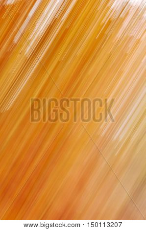 natural motion blurred colorful tree in sunny forest, abstract autumn natural background