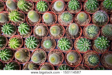 Cactus for background purposes. Plants on pebble background