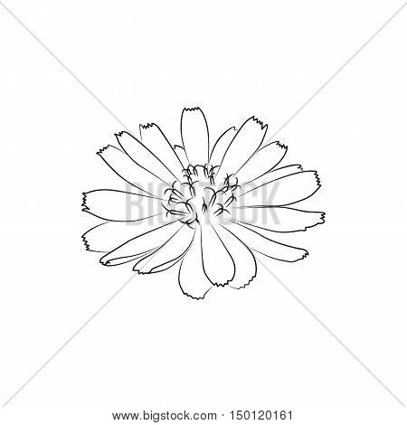 beautiful chicory flower lined minimal Icon Created For Mobile Web And Applications. Simple black icon isolated on white background. Vector illustration.