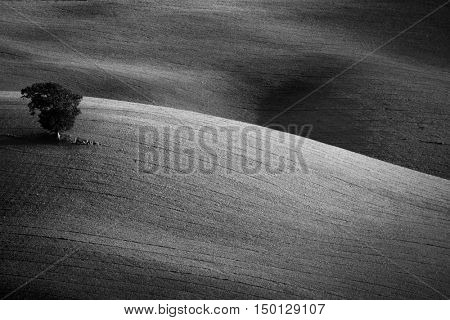 Concept Landscape - Single old Tree in beautiful lines hills, beautiful nature, black and white