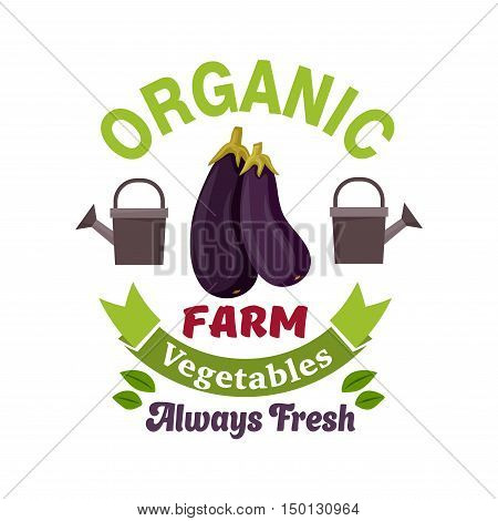 Organic vegetable farm badge with fresh eggplant vegetable, flanked by watering cans and green ribbon banner with leaves. Agriculture, farm market, healthy food design