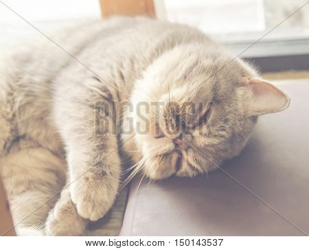 cat sleeping lying on floor vintage tone color