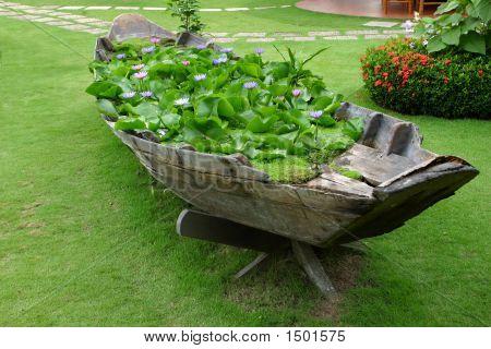 Lotus Boat Flowers