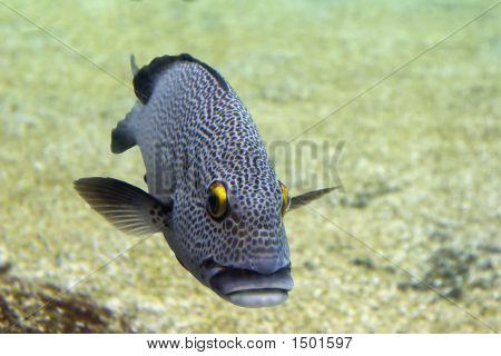 Coddfishl