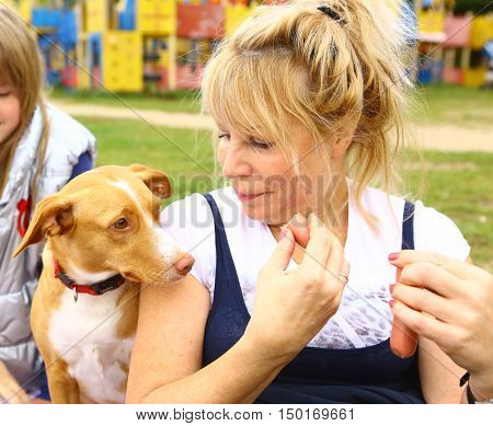 woman give sausage to the dog close up outdoor picnic photo