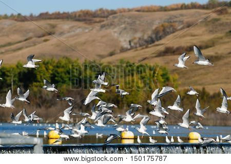 Flock Of Sea Gulls
