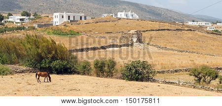 Panoramic view of a local village at Paros island in Greece with a horse eating hay.