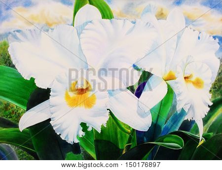 Watercolor painting original realistic white flower of cattleya orchid and green leaves in cloud background. Original painting