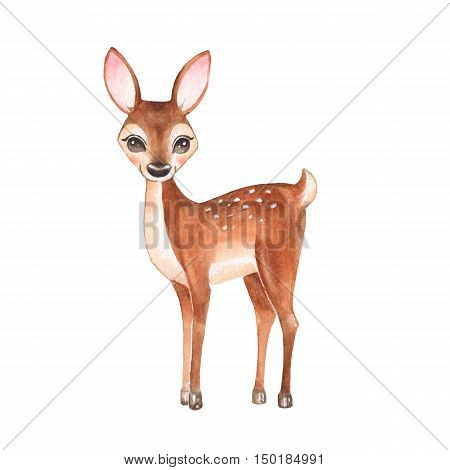 Baby Deer. Hand drawn cute deer. Cartoon illustration, isolated on white. Watercolor painting