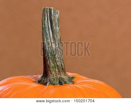 Fresh orange pumpkin on wooden background. Studio shot of a nice ornamental autumn pumpkin for Halloween.