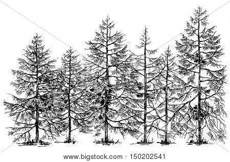 Pine forest hand drawn border