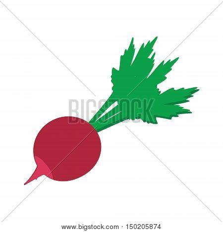 Vector illustration fresh healthy vegetable radish. Radish flat icon