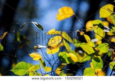 nice autumn abstract tree twig soft photo