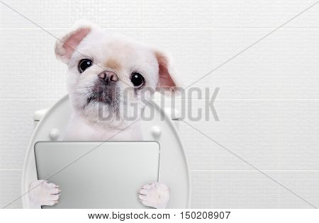 Dog with a tablet pc in a toilet.