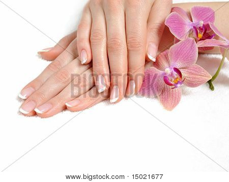 Beautiful Hand With Perfect Nail French Manicure And Purple Orchid Flowers. Isolated On White Backgr