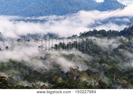Mist and fogs over Danum Valley jungle in Sabah Borneo Malaysia. Danum Valley Conservation Area is a 438 square kilometres tract of undisturbed lowland dipterocarp forest.