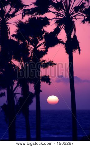Pink Sky Sunset At Venice Beach California Usa