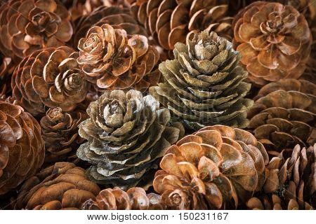 Closeup of two pinecones distinct from the rest
