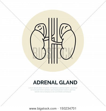 Human organ symbol adrenal glands. Modern vector line icons of urology. Elements - adrenal glands kidney. Linear medical pictograms for clinic hospital. Kidney pictogram. Adrenal glands symbol.
