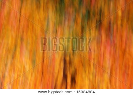 Autumn abstract background.   Fall foliage with camera motion.