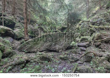 Old luxuriant unmanaged forest - luxuriant deserted forest