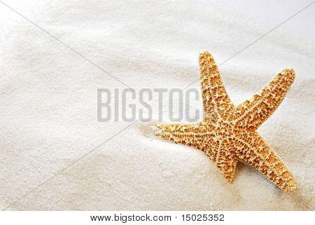 Hermosa estrella de mar en la arena blanca y brillante.  Macro con copia espacio incluido.